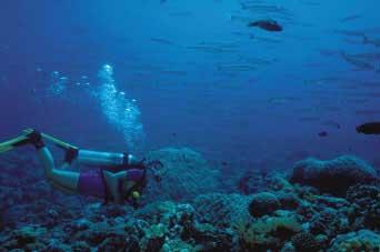 Der er masser af fisk på Palau